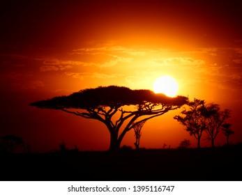 Safari sunrise in Serengeti National Park