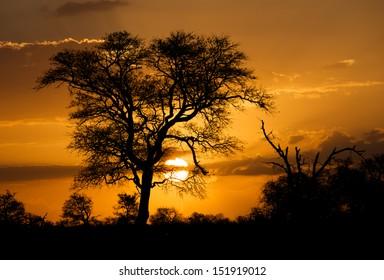 Safari Sunset Africa