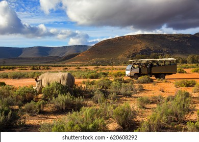 Safari truck and wildlife rhino in Western Cape South Africa