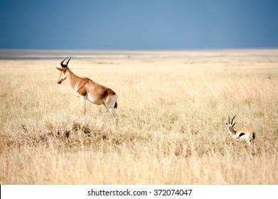 Safari visit to Tanzania