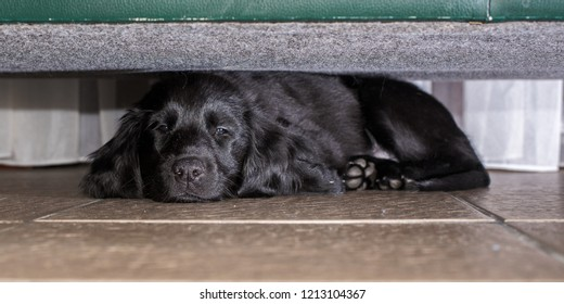 Safe under the couch