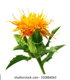 Safflower with leaves over white background