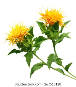 Safflower used as a food additive over white background