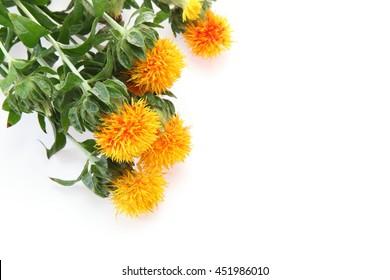 Safflower in a white background