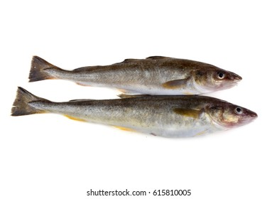 Saffron cod