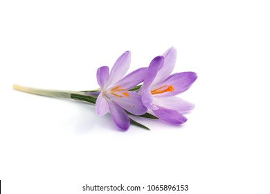 Saffron (Crocus sativus) isolated on white.
