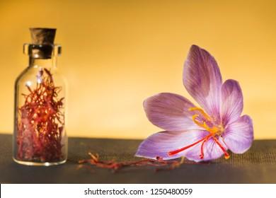 Saffron flower and dried saffron spice in a bottle, in background gold
