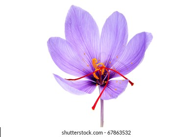 Saffron Flower Images Stock Photos Vectors Shutterstock