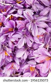 Safran ist das teuerste Gewürz der Welt.  - Shutterstock ID 1956135073