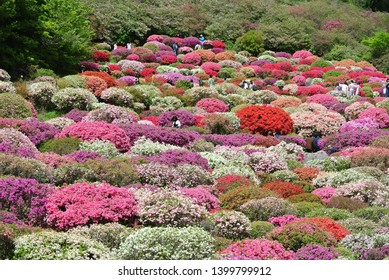 Saga Mifuneyama Rakuen rhododendron   #4