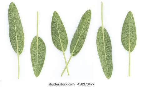 Sage Benefits Anti-inflammatory, Antiseptic and antibacterial, Reduces muscle tension, Relieves indigestion, Improve memory and arranged on a white background.