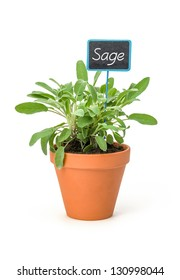 Sage in a clay pot with a wooden label
