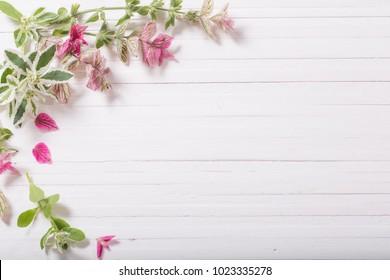 Sage decorative on white wooden background
