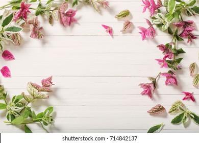 similar images stock photos vectors of sage decorative