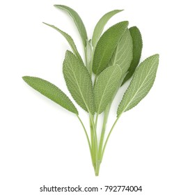 Sage herb leaves  bouquet isolated on white background cutout. Top view.