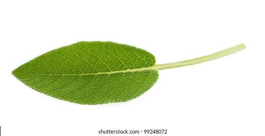 Sage leaf isolated on white