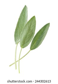 sage leaves isolated