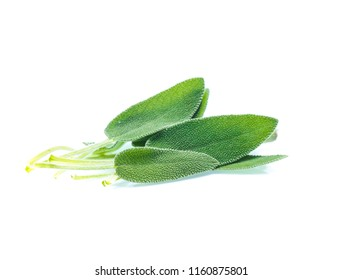 Sage leaves isolated on white background