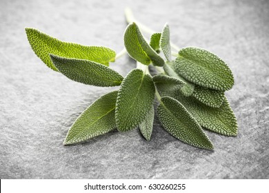 Sage leaves over black stone background. Top view.