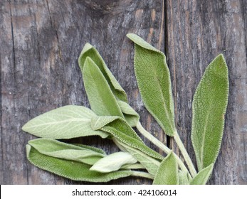 sage on a wooden background, selective focus