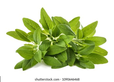 Sage (salvia officinalis) plants isolated on white