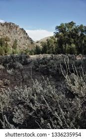 Sagebrush infront of western prairie landscape. Prairie in western america. Sagebrush bush in the prairie