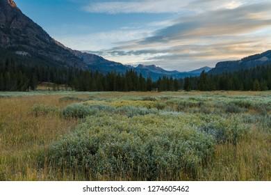 Sagebrush Prairie In Glacier National Park