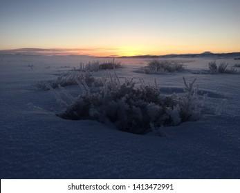 Sagebrush in winter at sunrise