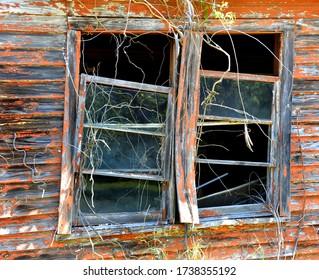 Sagging window sills, broken windows, peeling paint and dead vines make this decrepit set of windows creepy.
