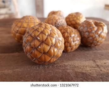 Sago Palm or Metroxylon sagu