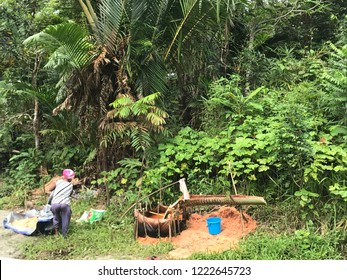 Sago palm process
