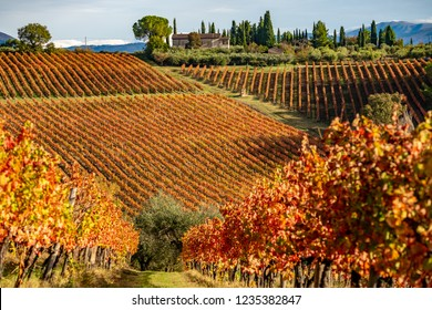 sagrantino wine vineyards in Montefalco, Umbria, Italy. Autumn colors