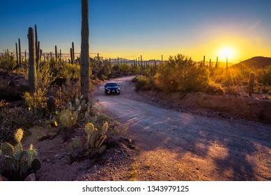 Saguaro, Arizona, USA - October 18, 2018 : Car driving a dirt road between cactuses of Saguaro National Park at sunset.