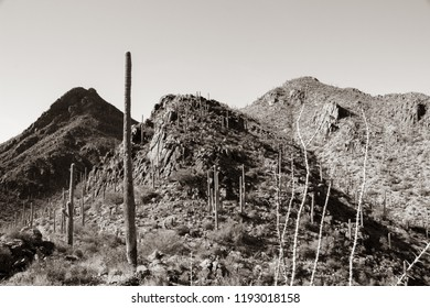 Saguaro cacti and other varieties of cactus in Tucson Mountain Park in Pima County. Rocky hills and tall ocotillo and other flora dot the Sonoran desert Landscape in this black and white photo. 2018.