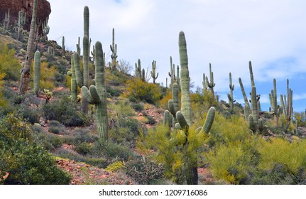 Saguaro cacti in Tonto National Monument is a National Monument in the Superstition Mountains, in Gila County of central Arizona. The area lies on the northeastern edge of the Sonoran Desert ecoregion