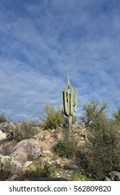 Saguaro cactus against a blue sky with slight clouds
