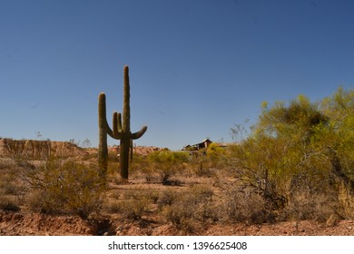 """The Saguaro Cactus (Carnegiea gigantea)The saguaro cactus (pronounced """"sah-wah-roh""""), is the icon of the American west. Images of these cacti are seen all through our lives as a symbol of the America"""