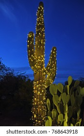 Saguaro cactus decorated with a string of lights and prickly pear cactus in front of a dark blue night sky