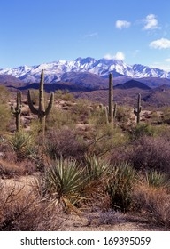 Saguaro cactus, the largest in the world, grows on the southwest desert of Arizona, northern Mexico and eastern California/saguaro/These giants can grow to fifty feet high and can have fifty arms.
