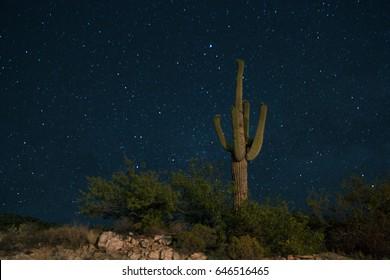 Saguaro Cactus, Long Exposure