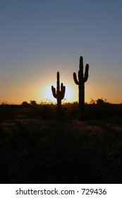 saguaro cactus in the morning at sunrise