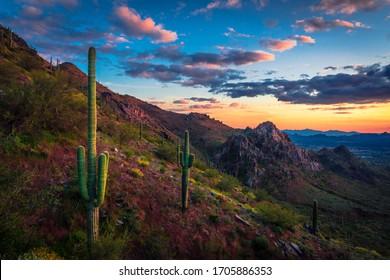 saguaro Cactus on Desert mountain Landscape during sunset