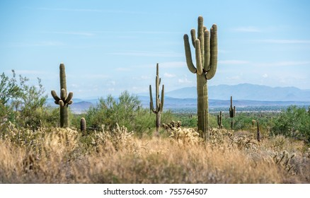 https://image.shutterstock.com/image-photo/saguaro-cactus-on-hot-morning-260nw-755764507.jpg