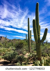 Saguaro cactus prickly pear cactus and other desert plants under bright blue sky.