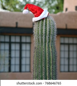 Saguaro cactus with Santa Claus hat and  house in the background