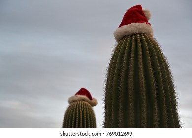 Saguaro cactus with santa hat during daytime