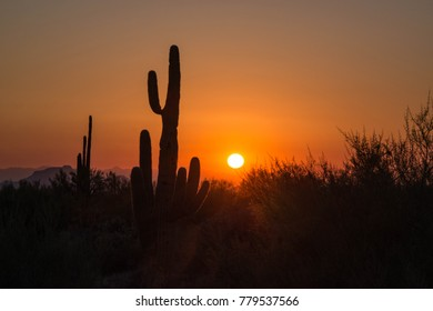 Saguaro cactus silhouette in Arizona desert at colorful sunset