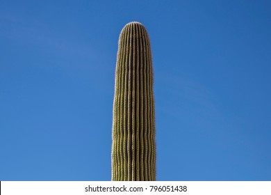 Saguaro cactus single against blue sky desert prickly green nature phallic background texture wallpaper minimalist isolated singular one