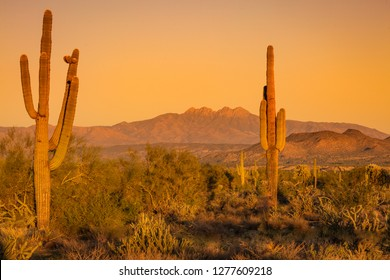 Saguaro cactus stand tall in the Arizona Sonoran desert as the sun begins to set, turning the blue sky orange. A calmness settles over the Arizona wilderness east of Phoenix in the southwestern USA