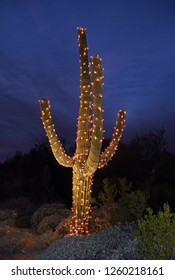 Saguaro cactus with string of lights